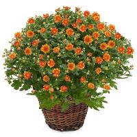 planten Utrecht