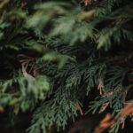 Kenmerken van Red Cedar, de ultieme benzine voor gevelbekleding